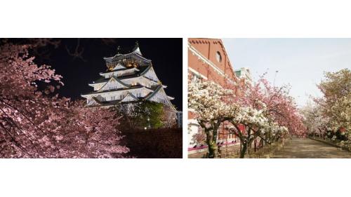 赴日旅游,正逢日本樱花季!购物、赏樱、大阪同时满足你