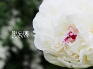 麓安娜,于牡丹花海中绽放的中国护肤新势力